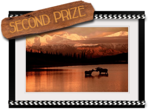 secondprize- rugged romance