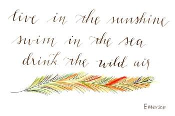 Wild Air quote